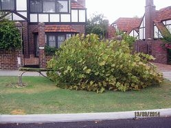 Tree vandals 'malicious': mayor