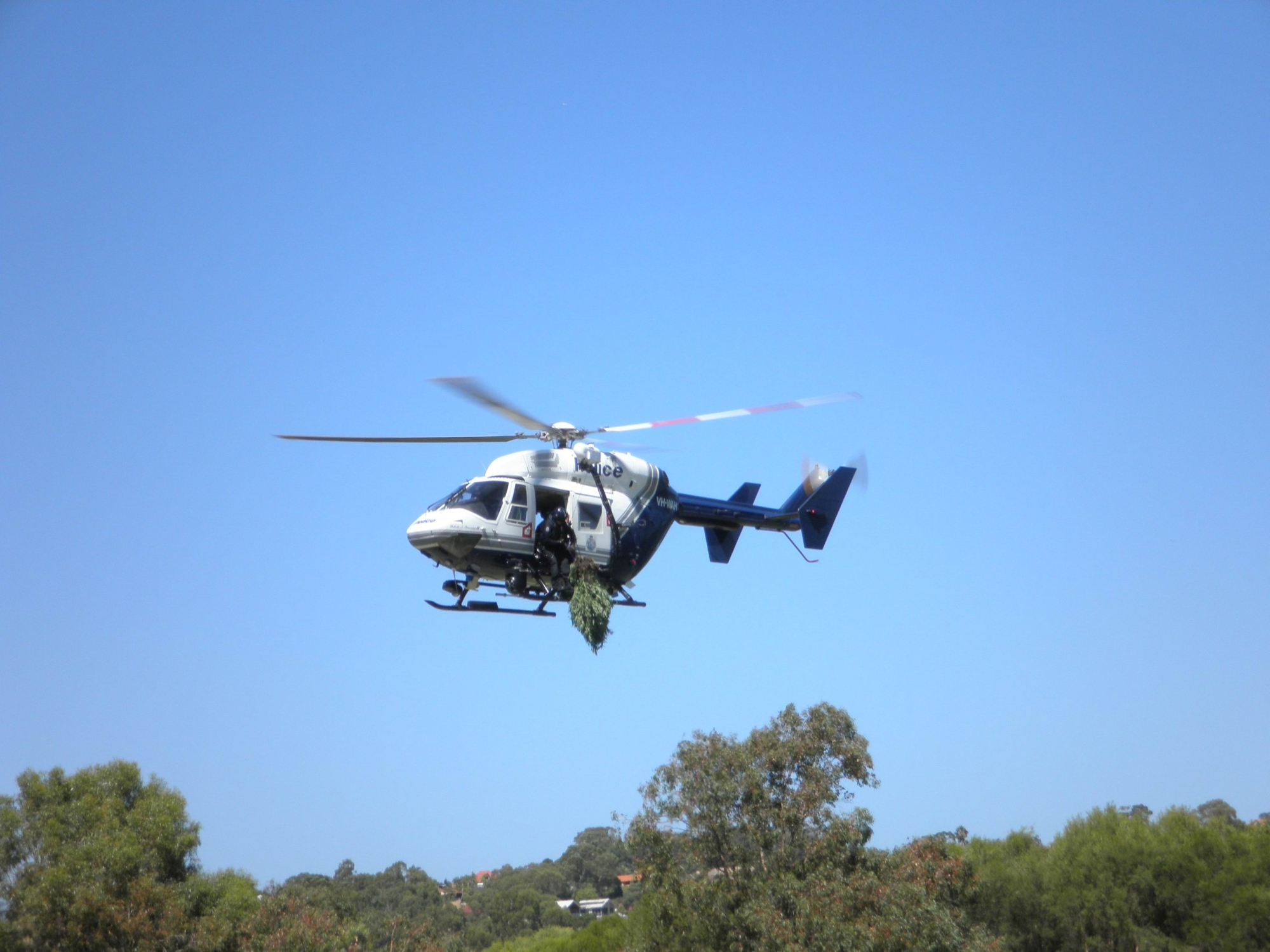 Police fly out the marijuana haul. Pic: Dee Tsalis.