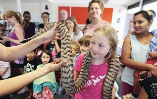Willow Armistead (10), of Coolbellup, with Electra, a black-headed python. |Picture: Martin Kennealey |www.communitypix.com.au d413719