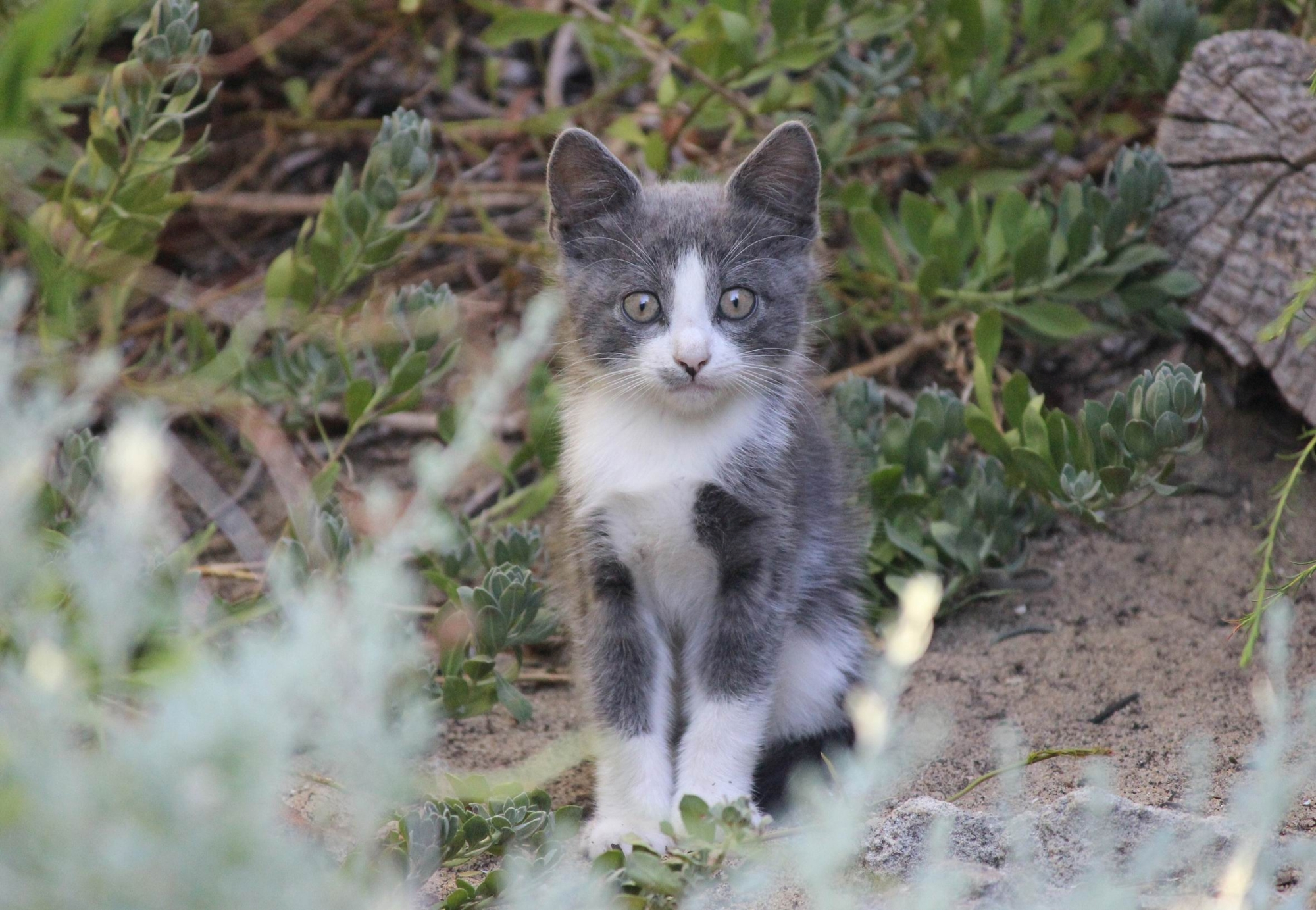 Plague of abandoned cats as cat laws yet to bite with community
