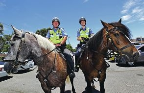 Mane machines: Senior Constable Jason Burnham on Bluey and 1st Class Constable Jodie Howard on Lt Dan.