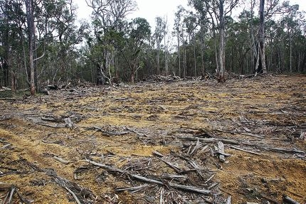 Clearing within Ashendon Forest Coupes area. Picture: David Baylis www.communitypix.com.au d407240