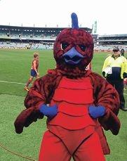 The Falcons mascot at this year's WAFL grand final at Subiaco Oval.