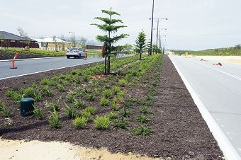 Waterwise landscaping on Marmion Avenue.