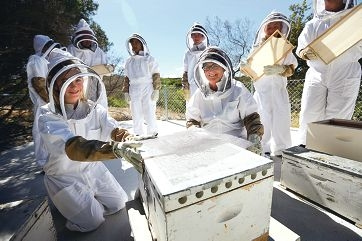 Student Phoebe Colling with principal Rhonda Sheehan and other students helping Agriculture Department officers set up WA's first-ever school beekeeping and disease monitoring station. Picture: Andrew Ritchie www.communitypix.com.au d410537