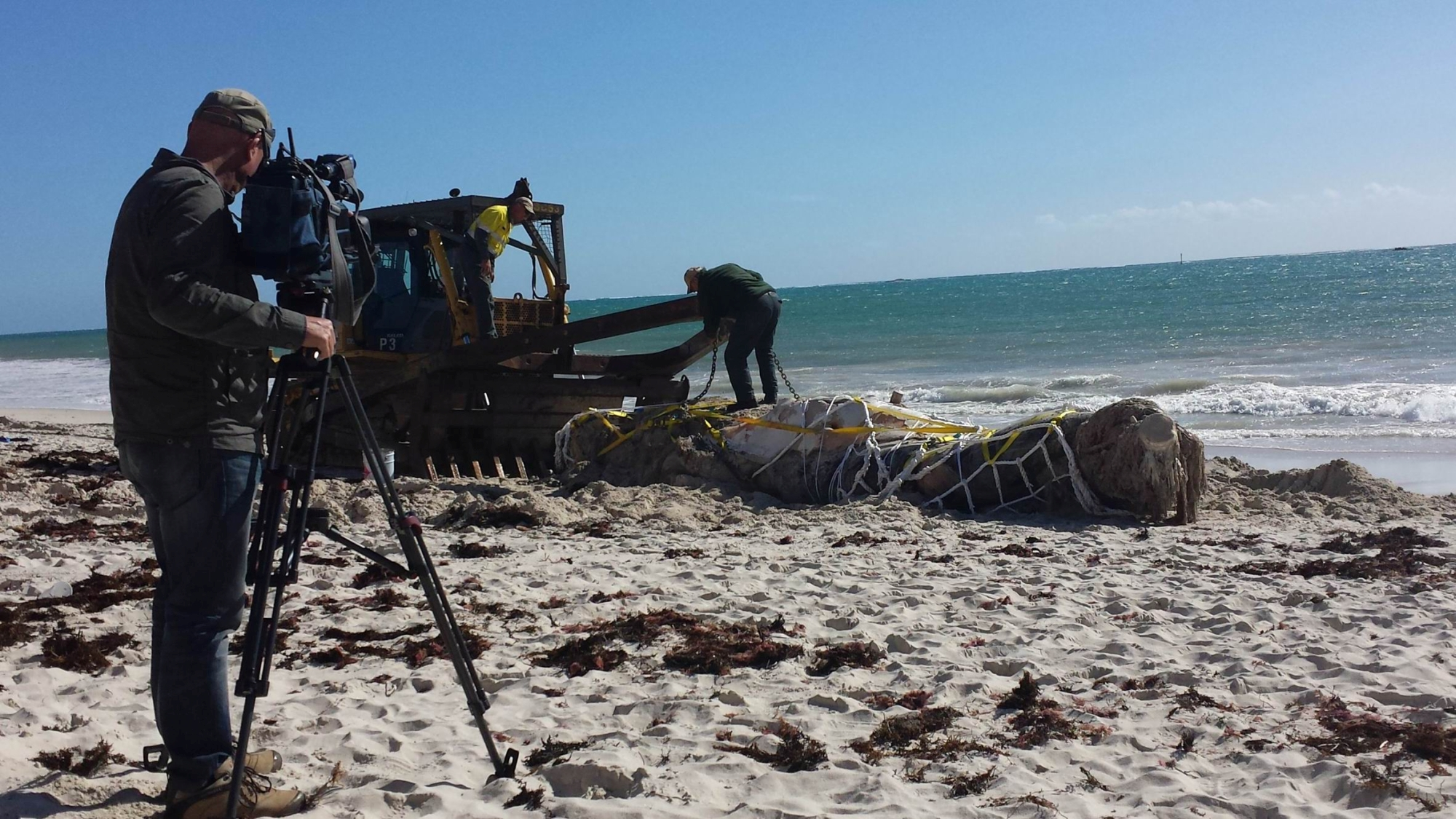 The whale carcass washed up at Pinnaroo Point with TV news crews looking on. Picture: Tom Forbes