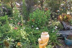 The Winnetts' Wanneroo garden has a bushland feel.