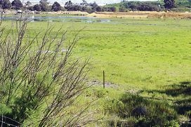 The wetland area that will make way for light industrial development.
