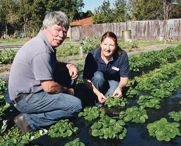 Strawberry specialist Gerry Verheyen, of Wanneroo, and DAFWA project leader Aileen Reid.