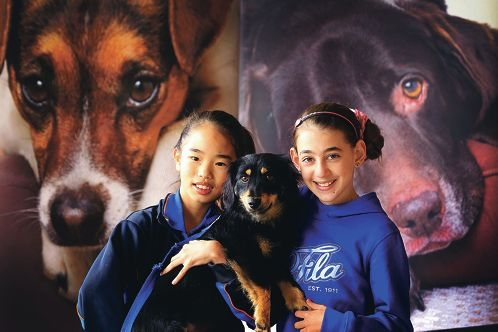 Samantha Seah (11) holding Velvet and Brianna |Monforti (11) are fundraising to help abandoned |animals.