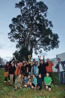Tree cheers: Hamilton Hill tree supporters are ecstatic that the tuart tree will continue to be a part of their community.