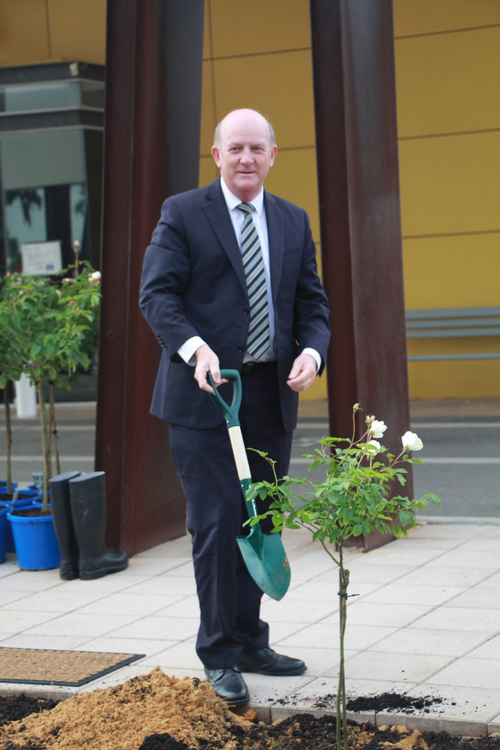 Mr Day planting the first of 40 roses to celebrate the hospital's anniversary.