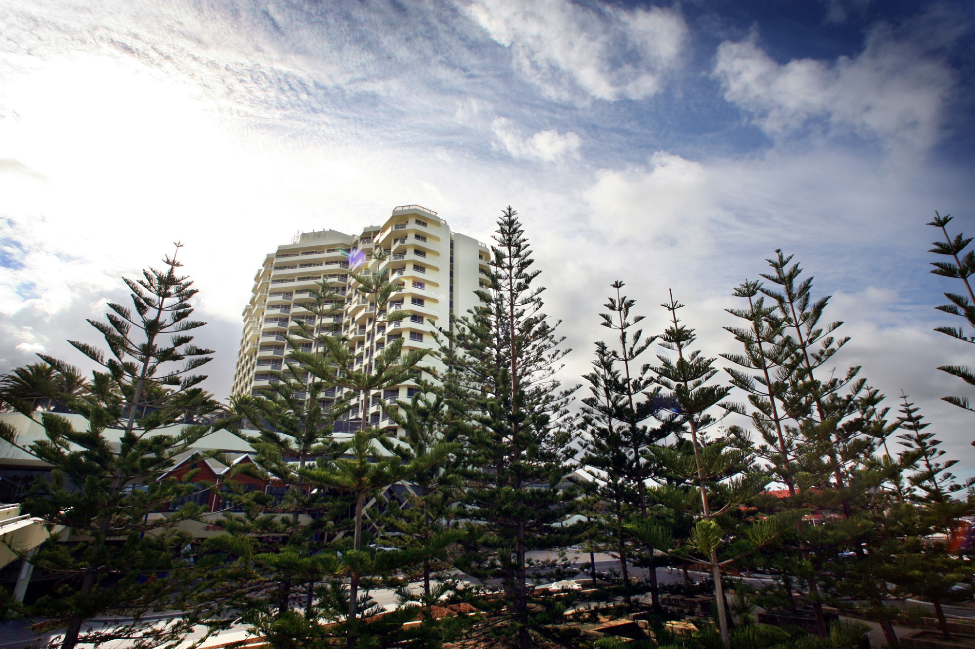 The iconic pines of Scarborough Beach.