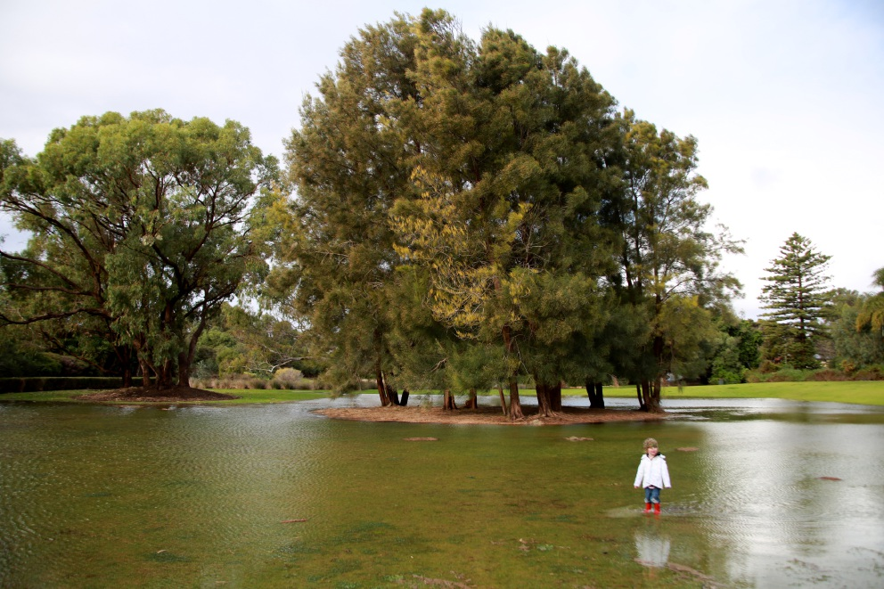Madison 'Wombat' Ellisdon (2) wades through Old Nursery Park which flooded during heavy rain last week. Pictures: Outback Bob Photography