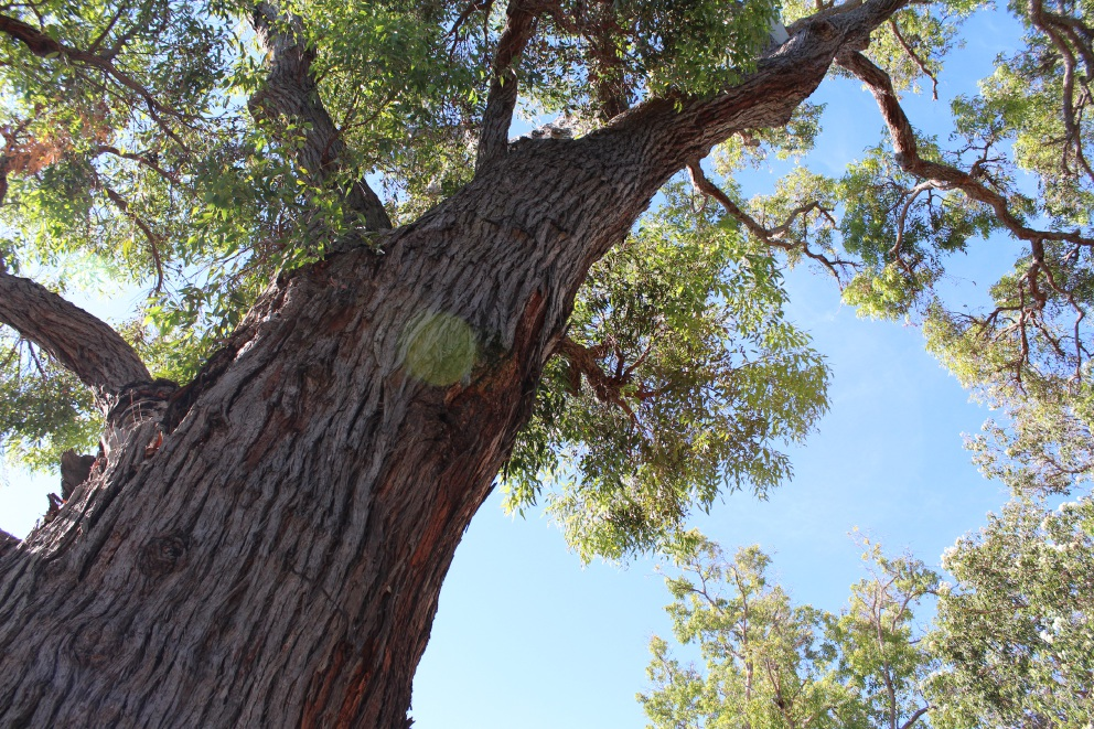 City of Stirling moves to further protect trees