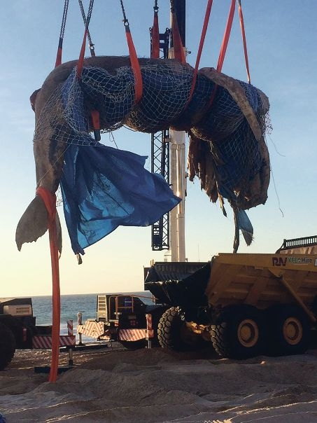 The whale being transported to a waste facility.