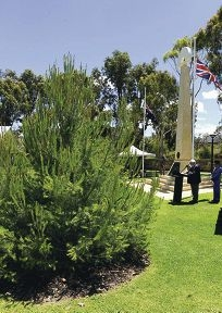 Joondalup's lone pine with Ron Privilege speaking in the background at the Remebrance Day service. Picture: Chris Kershaw