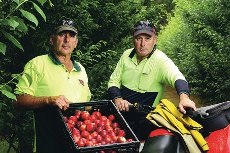 Ripe for disaster... fruit growers John and Danny Di Marco, of Karragullen. Picture: Marcelo Palacios d429143