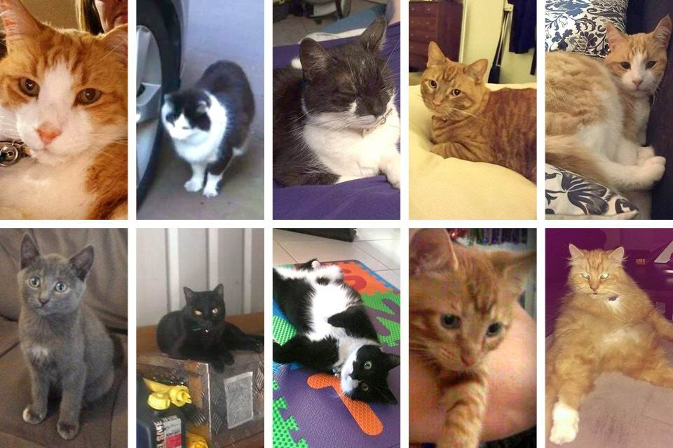 Some of the cats killed in attacks in Ballajura.