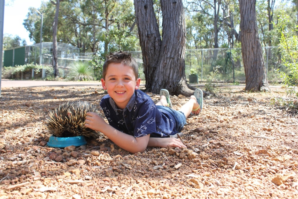 Ethan with his adopted echidna at Kanyana Wildlife.