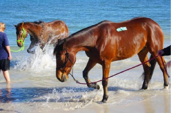 Hillarys Horse Beach supporters take a stand against potential closure