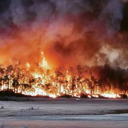 Bushfire management system failed citizens: report recommends creation of Rural Fire Service