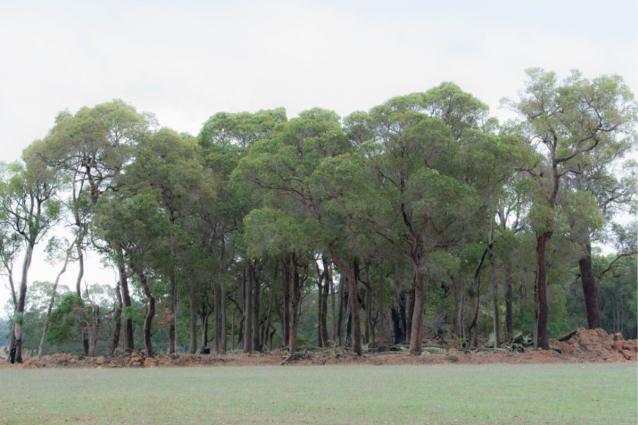 Bayswater councillor hails new 'tree-mendous' policy to protect and maintain trees