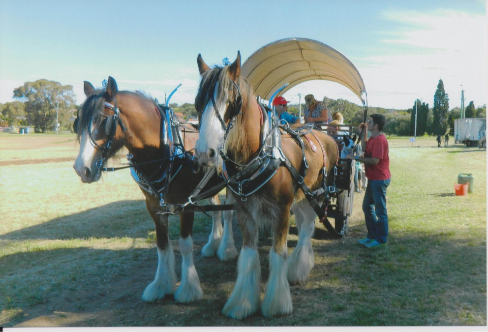 Clydesdale wagon during the 2013 Stables Open Day at Randwick Stables.