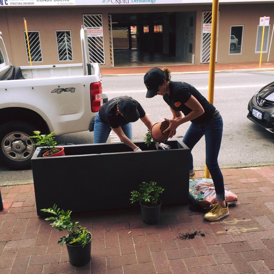 Leederville: volunteers help brighten suburb's streets with planter boxes