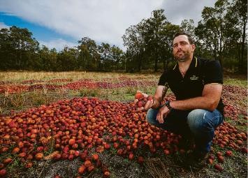Roleystone fruit grower Peter Casotti. Picture: Matt Jelonek d452596d