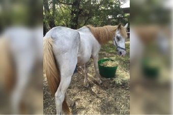 Neglected horses responding well to treatment, says RSPCA