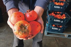 Hills growers are disappointed with a fruit fly funding announcement.