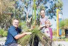 Cultural awareness officer Jason Barrow examining a grasstree with his daughters Kaitlyn (11) and Juliette (5).
