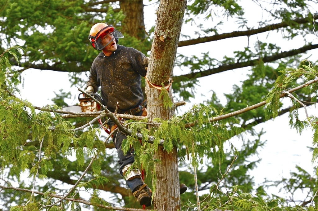 Tips to Help with Tree Lopping