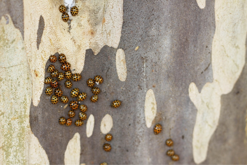 Sprays Could Be Killing Our Ladybirds