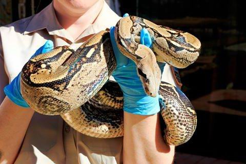 Snake discovery: Baldivis man charged after police find huge haul of reptiles