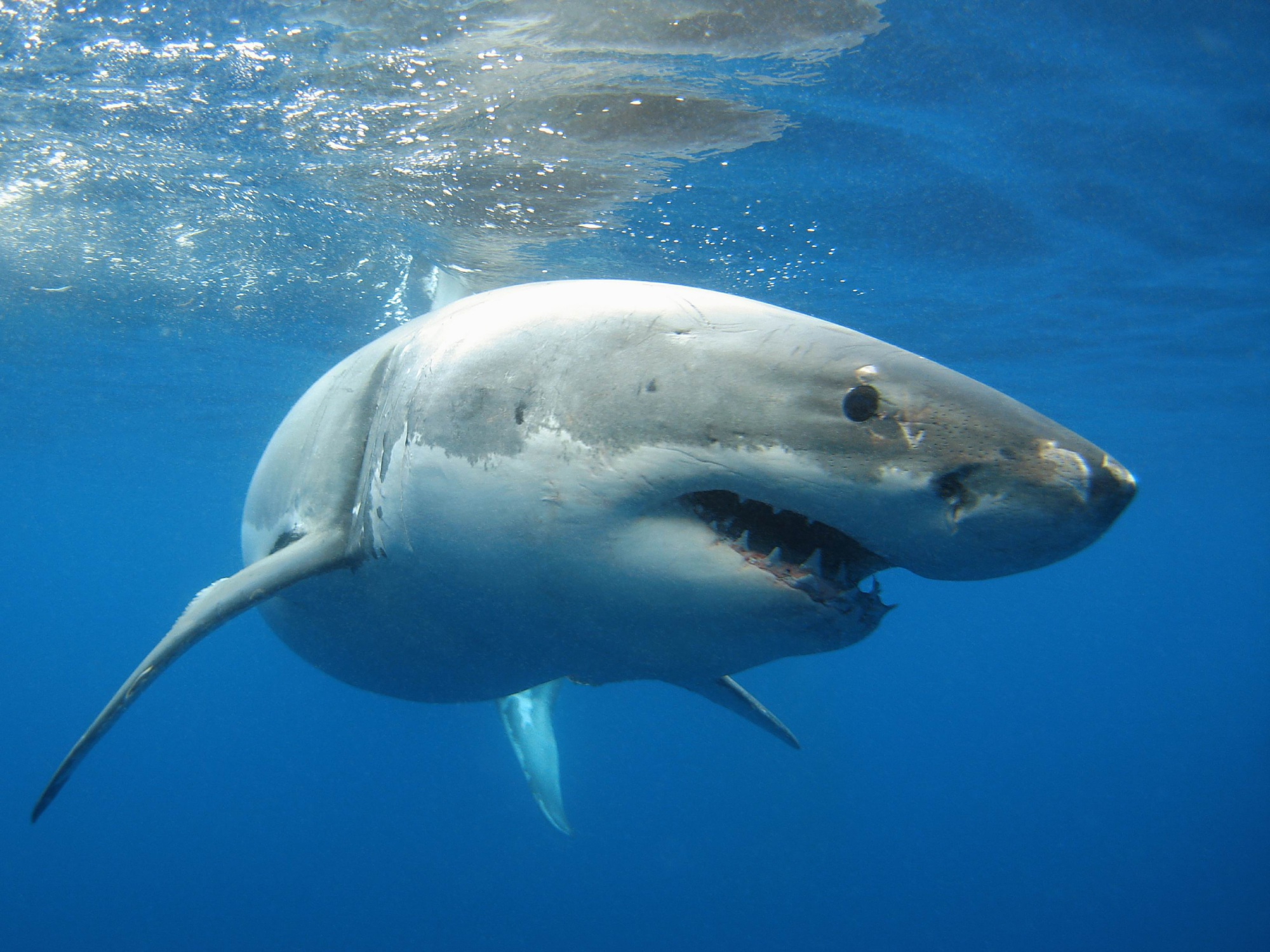 Fisheries take emergency action after record number of shark sightings