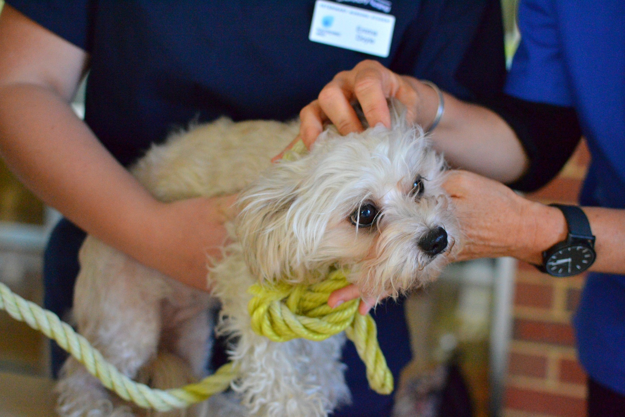 RSPCA will be running a Lasting Love adoption drive this long weekend.