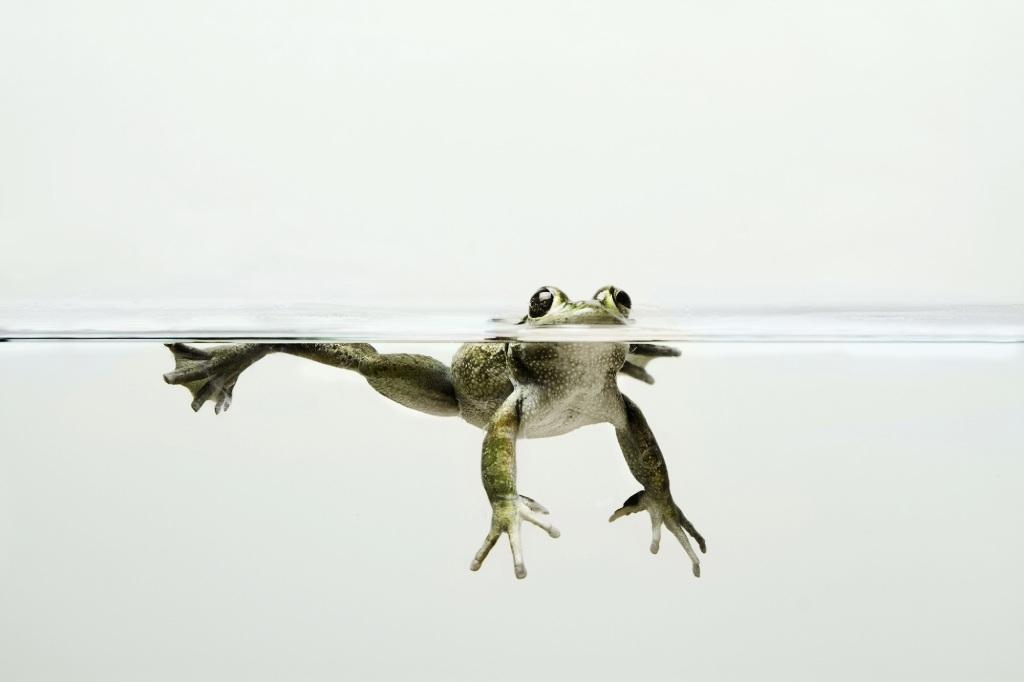 Floating Frog by Olivia Vincent.