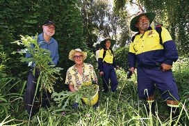 Baigup Wetland Interest Group weeding day co-ordinator Judy Slehofer (centre) with Mike Clarke and City of Bayswater environmental field officers Yolanda Rhemrev and Garry Cross. Picture: Marcus Whisson d427747