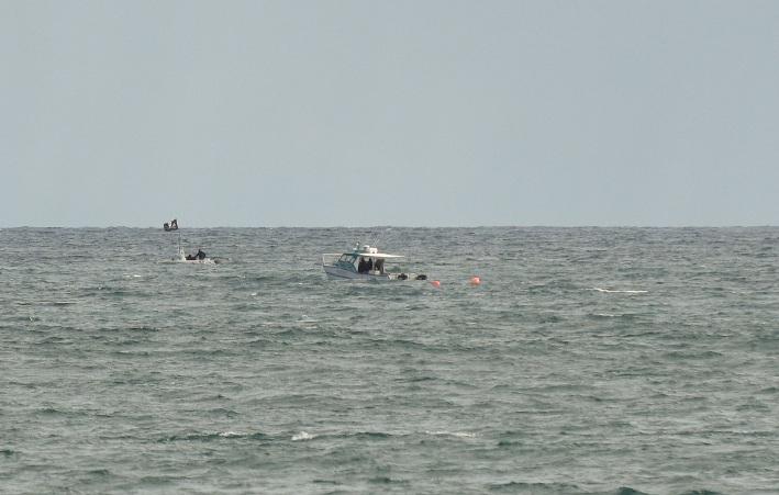 Sea Shepherd monitoring the drum lines on Monday. Picture: Josh Tucker