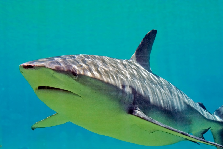 Shark problem needs real experts to weigh in.