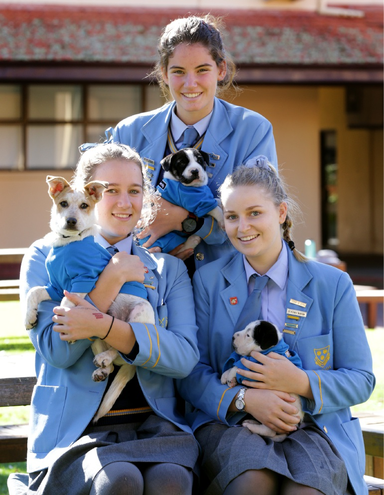 Year 12 students Phoebe Longmire, Sarah Woolhouse and Lucy Craske with some puppies. Picture: Martin Kennealey