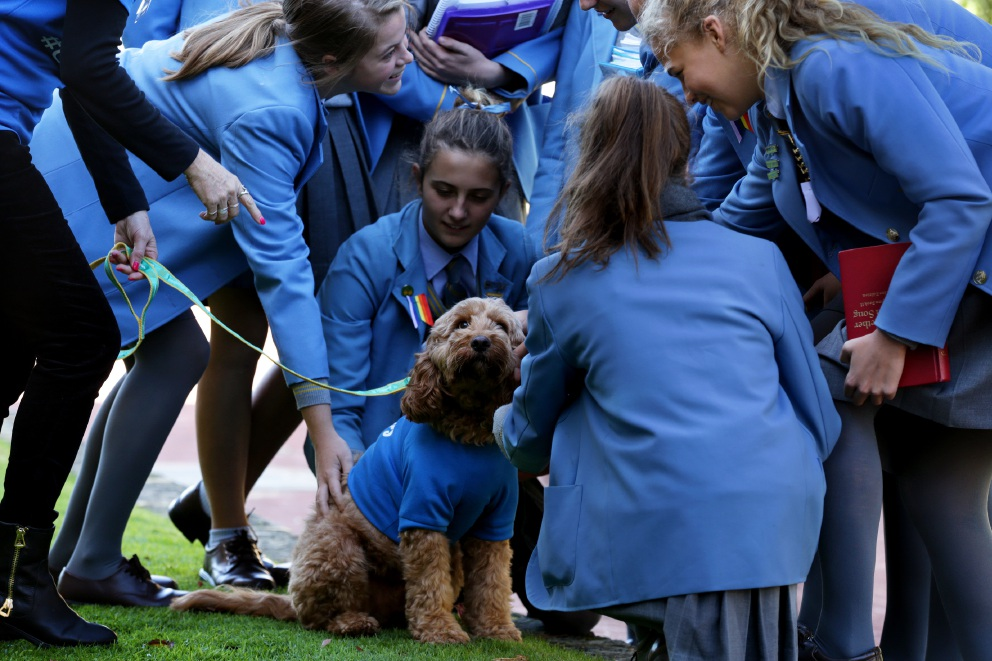 St Hilda's students get puppy surprise to help de-stress after exams