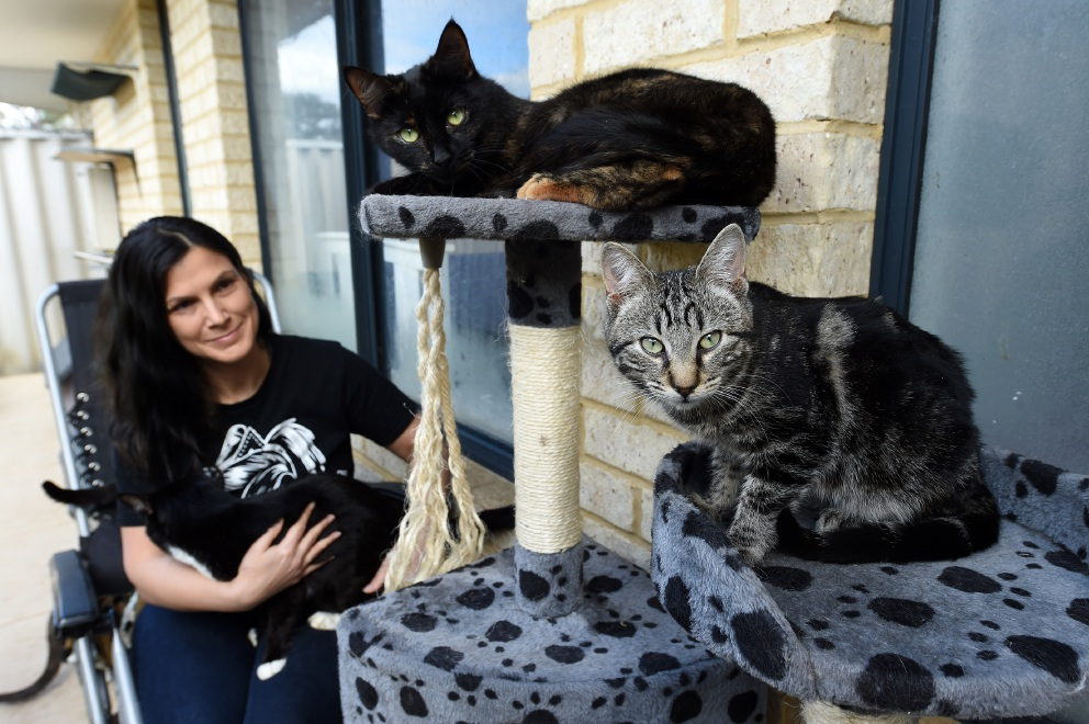 Melita Shonis has been rescuing cats for 22 years and is raising funds to buy desexing vouchers to be included in a Perth Pet Hamper for Father's Day.
