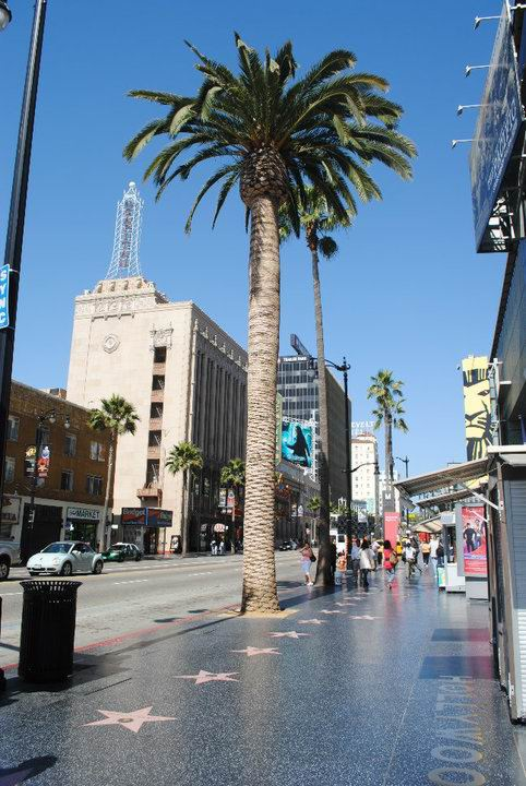 Beaufort Street could look like the Hollywood walk of fame.
