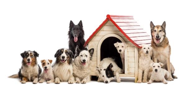 Scoop the poop, dog owners