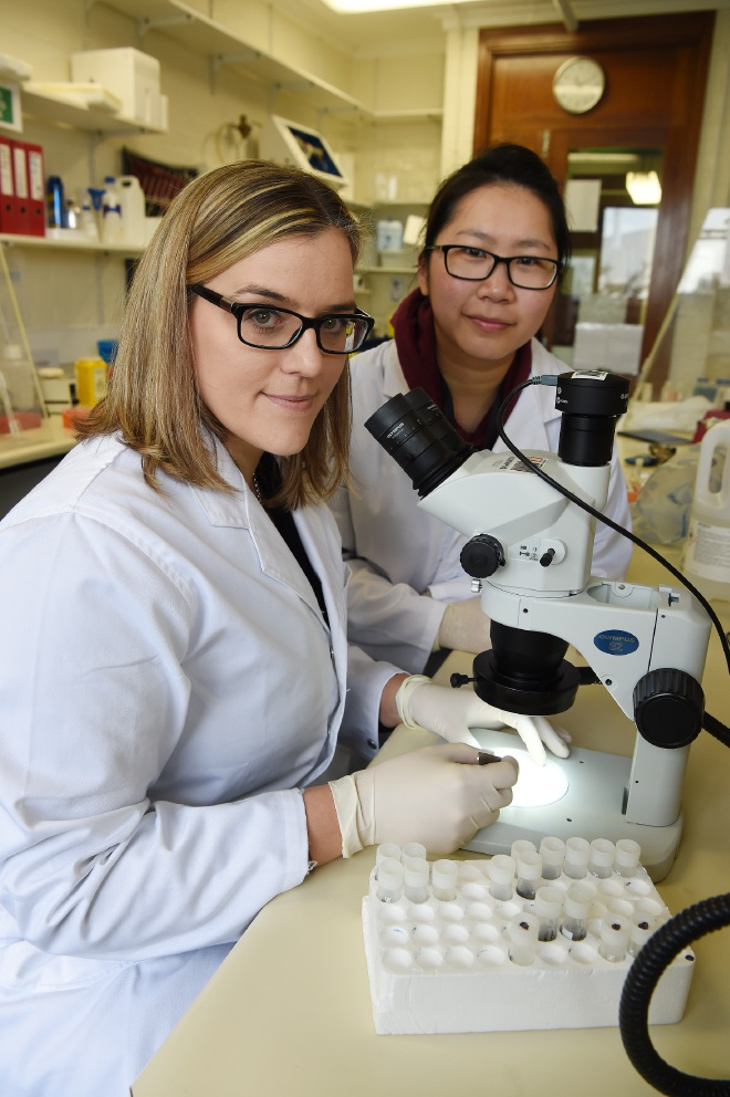 Murdoch Uni appeals for help to make breakthrough in research on tick-borne diseases