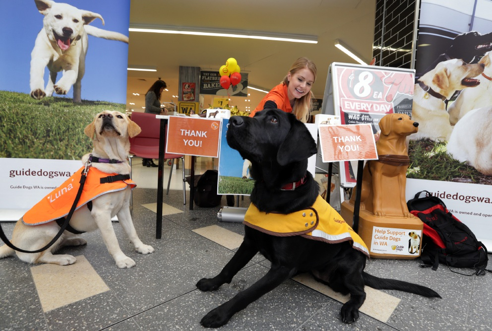 Meet guide dog puppies at Lakeside Joondalup