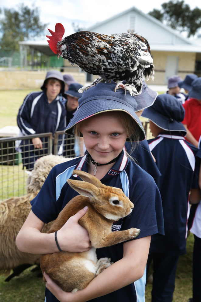 Fascination on the farm for Quinns Beach Primary students